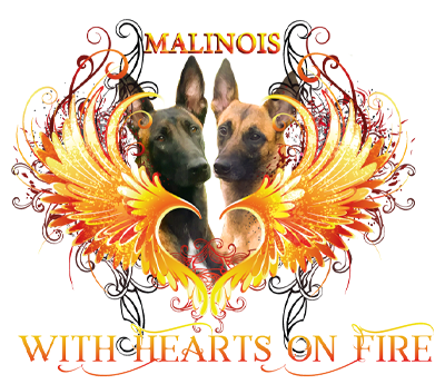 Malinois-With Hearts on Fire